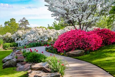 Cuadro Trayectoria curva a través de las orillas de las Azeleas y debajo de los árboles de cornejo con tulipanes bajo un cielo azul - Belleza en la naturaleza