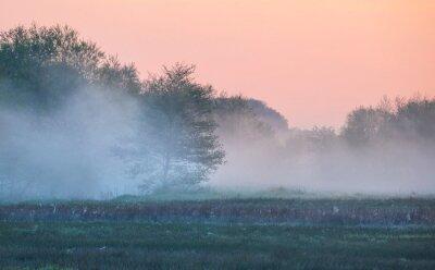 tree in dense morning fog