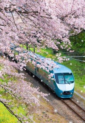 Cuadro Tren de Japón en saomura flor de cerezo en la ciudad de Yamakita, prefectura de Kanagawa