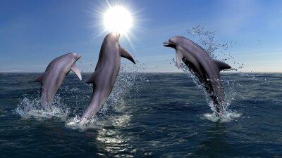 Cuadro Tres delfines