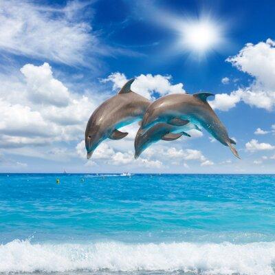 Cuadro Tres delfines saltando