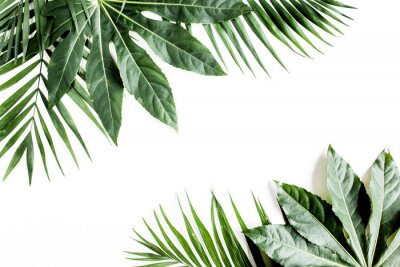 Cuadro Tropical palm leaves Aralia isolated on white background. Tropical nature concept.