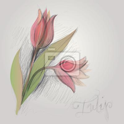 Tulip Esbozo Realista De La Flor Pinturas Para La Pared Cuadros