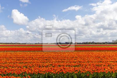 Tulip paisaje agrícola bombilla contra un cielo azul soleado