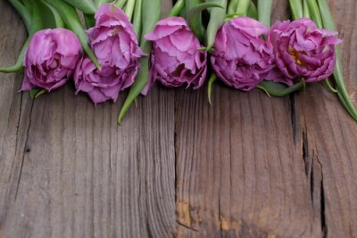 Cuadro Tulipán