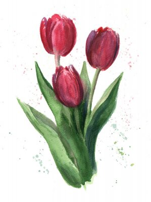 Cuadro Tulipanes, acuarela