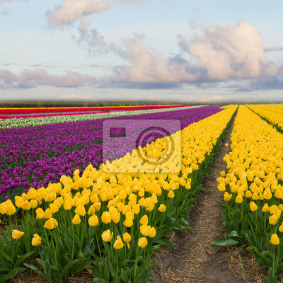 Cuadro tulipanes de primavera de campo en un día soleado