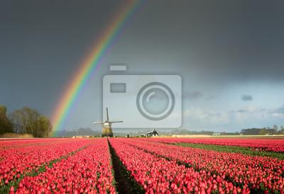 Tulipanes rojos, un molino de viento y un arco iris