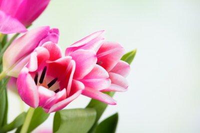Cuadro Tulpenblüten