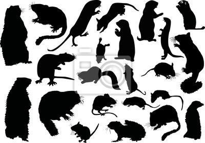 twanty uno siluetas de roedores