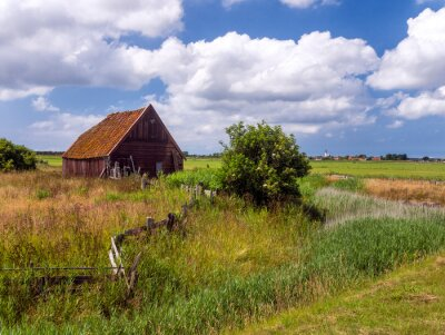 Typical landscape of the Dutch island Texel, with derelict sheep shed and the white church of Den Hoorn in the background