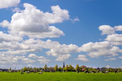 Typical landscape of the Dutch province of Friesland; a meadow with cows, a tiny village on the low horizon and a beautiful big sky
