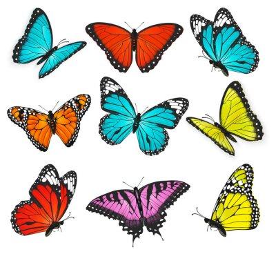 Cuadro un conjunto de realista colorido mariposas ilustración