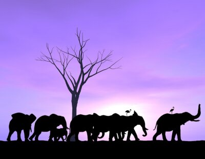 Cuadro Un elefante lidera el camino como los otros siguen con una puesta de sol de color púrpura o la salida del sol.