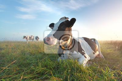 Vaca en el pasto al amanecer