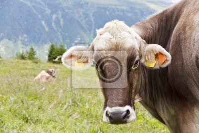 Vacas de la montaña en la montaña de los Alpes