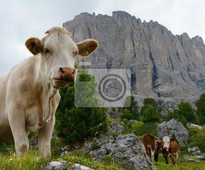 Vacas delante de los Dolomitas