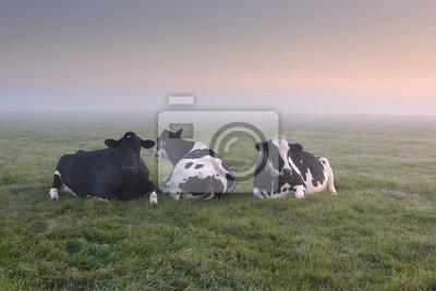 vacas relajadas en el pasto al amanecer brumoso