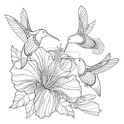 Vector de vuelo colibrí o colibri y ornamentado hibiscus en el ...