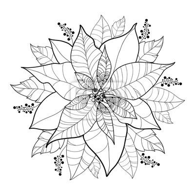 Vector flor de poinsettia o estrella de navidad en negro aislado ...