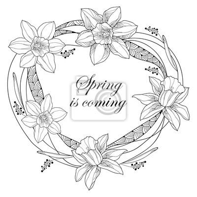 Vector marco redondo con esbozo narcisos o flores de narciso ...