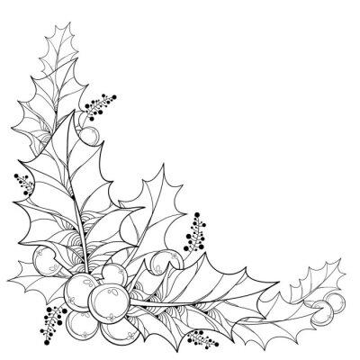 Vector ramita con hojas de contorno y bayas de ilex o navidad ...