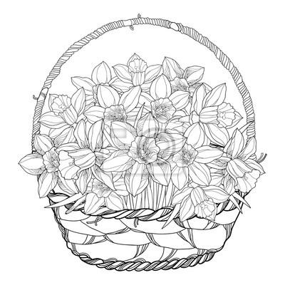 Vector ramo con esbozo narcisos o narcisos flores en la canasta ...