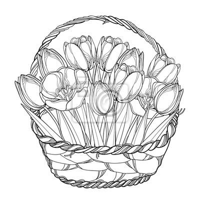 Cuadro Vector Ramo Con Flores De Tulipanes De Contorno En La Canasta