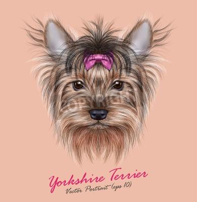 Cuadro Vector Retrato de un perro doméstico. Cabeza linda de Yorkshire Terrier en fondo del silbido de bala.