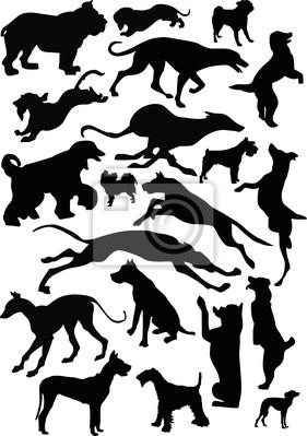 veinte perros negros