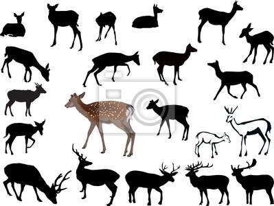 veintiún ciervos ilustración