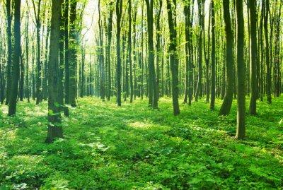 Cuadro verde bosque