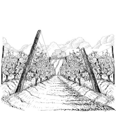 Cuadro Vineyard landscape with clouds and building on the hill. Hand drawn sketch vector illustration on white