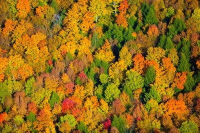 Cuadro Vista aérea del follaje de otoño en Vermont.