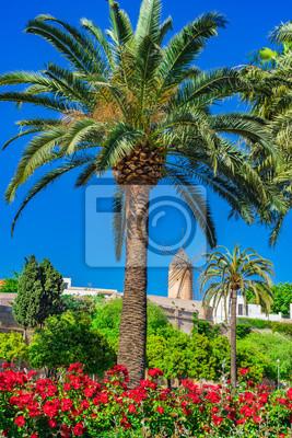 Vista de un viejo molino histórico en Palma de Mallorca España