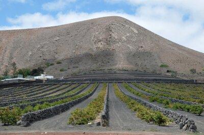 Volcánica Vineyard