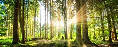 Cuadro Waldpanorama con rayos de sol