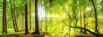 Cuadro Waldpanorama con rayos del sol