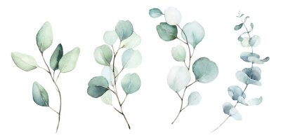 Cuadro Watercolor floral illustration set - green leaf branches collection, for wedding stationary, greetings, wallpapers, fashion, background. Eucalyptus, olive, green leaves, etc.