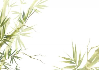 Cuadro Watercolor illustration painting of bamboo leaves , on white background