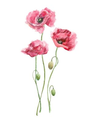 Cuadro watercolor red flowers (poppies)