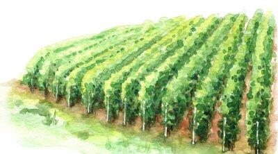Cuadro Watercolor Sketch Rural Scene Fragment of Vineyard