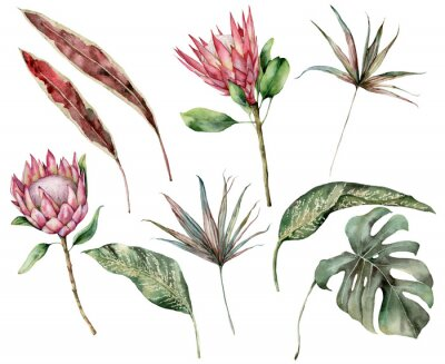 Cuadro Watercolor tropical set with protea and palm leaves. Hand painted exotic flower, palm and monstera leaves isolated on white background. Floral illustration for design, print, fabric or background.