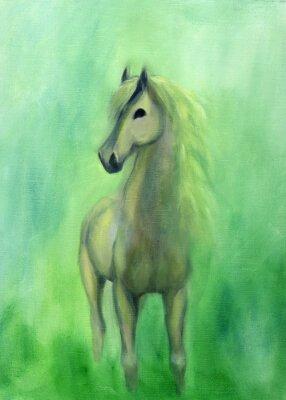 Cuadro White stallion