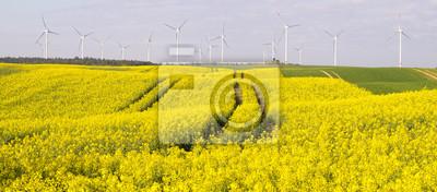 Wiosenne pole, kwitnący rzepak, zielone, młode zboże