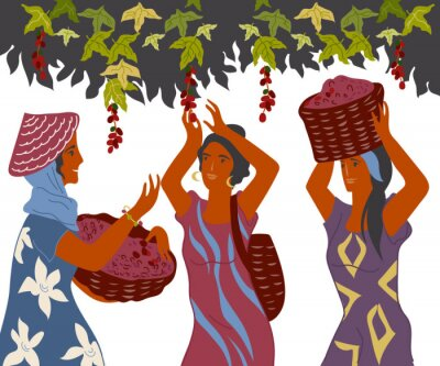 Cuadro Women with basket pick coffee beans from the bush on plantation, image for cafe and packaging. Coffee harvest gatherers in work flat cartoon vector illustration isolated on white background.