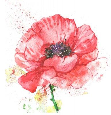 Cuadro Красный цветок, мак, иллюстрация акварелью