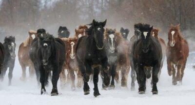 Cuadro 雪原 を 走 る 馬