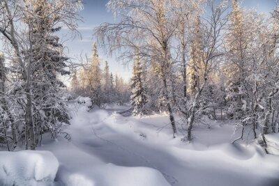 Cuadro лесотундра Зимняя