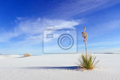 Yucca en White Sands